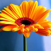 flower-sq
